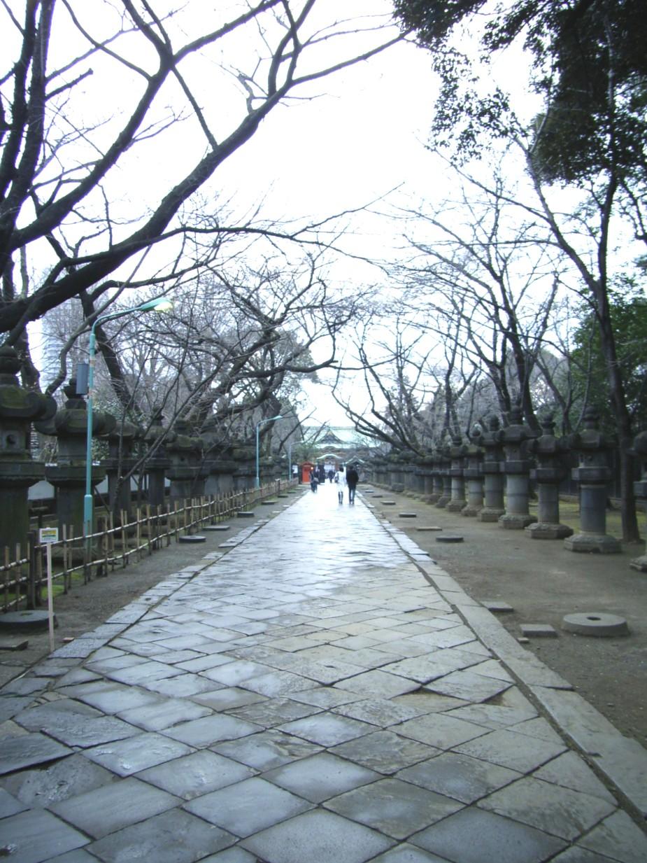梅は咲いたか 桜は・・・_d0091021_22592326.jpg