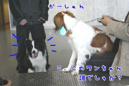 d0013149_073621.jpg