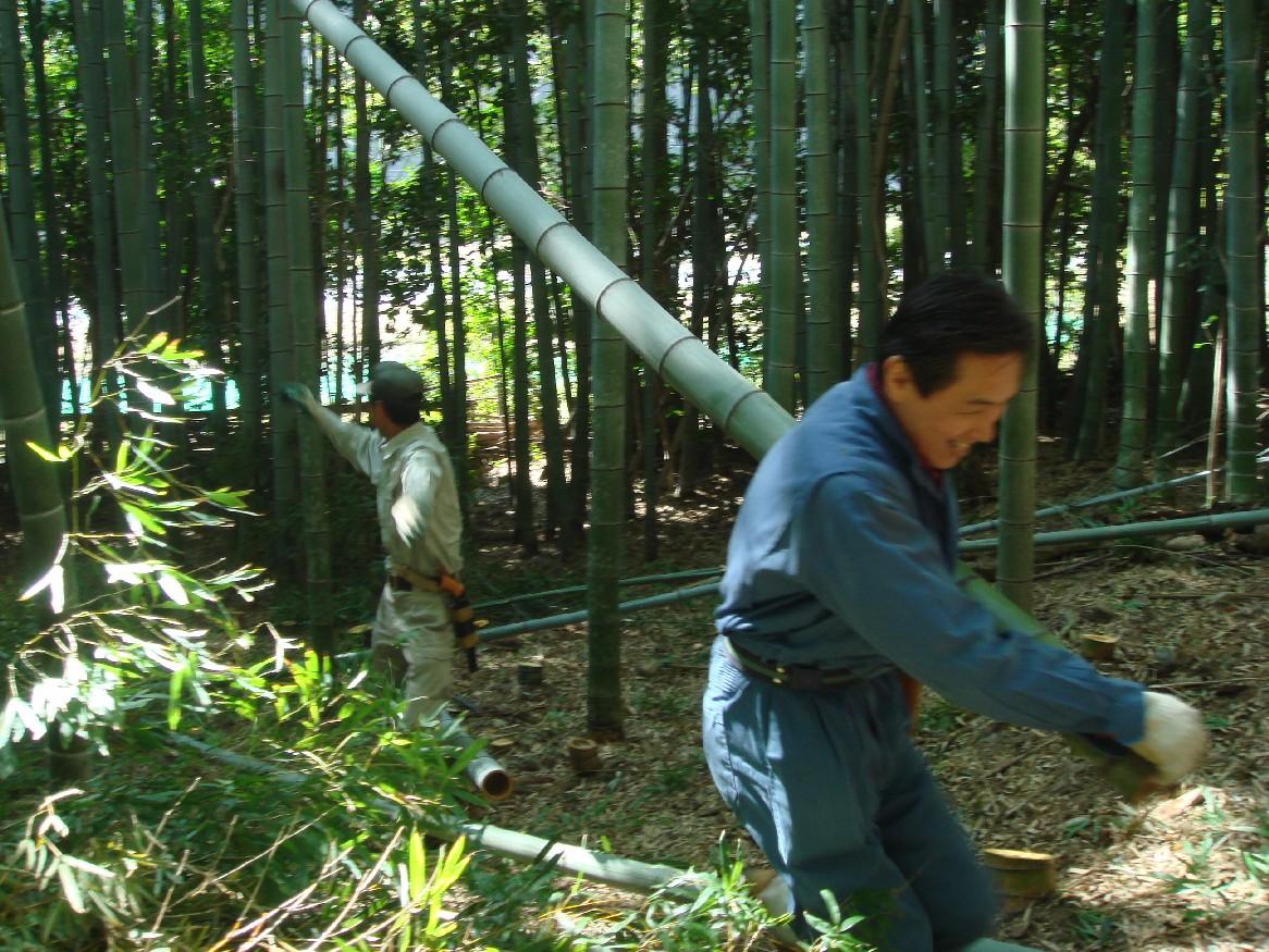 竹炭部会定例活動日:竹伐り_c0108460_16522974.jpg