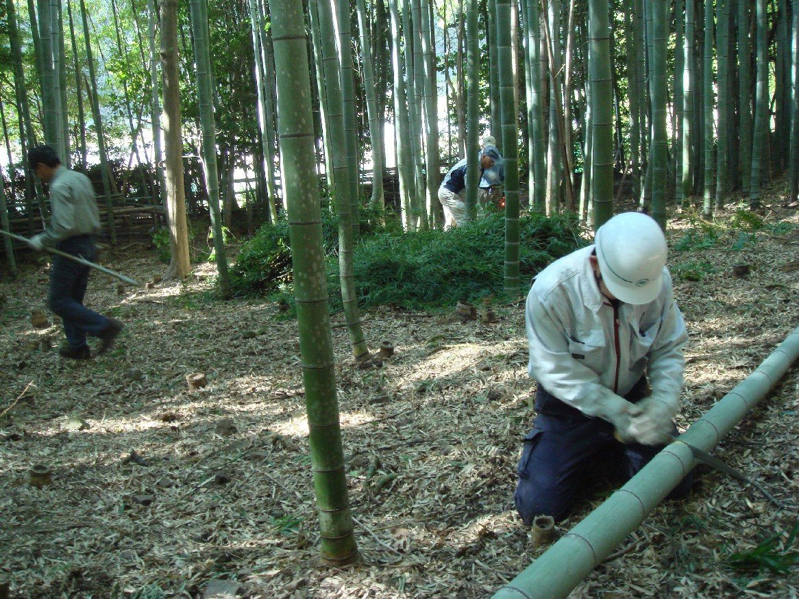 竹炭部会定例活動日:竹伐り_c0108460_1652504.jpg