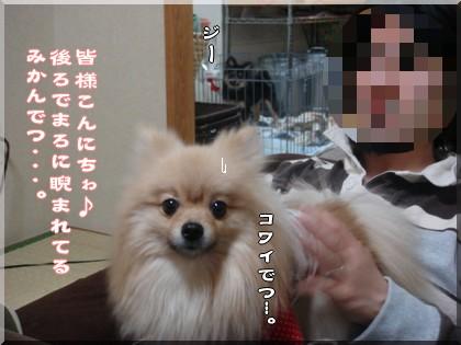 b0078073_2242499.jpg