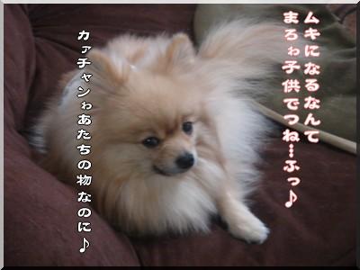 b0078073_22532068.jpg