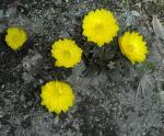 春かな、もう。_d0026905_13172947.jpg