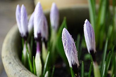 春の訪れ_f0045624_19205411.jpg