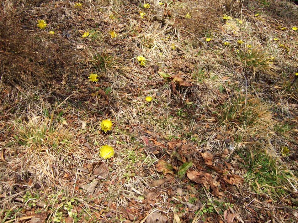 にっぽんの春的風景_d0001843_2257536.jpg