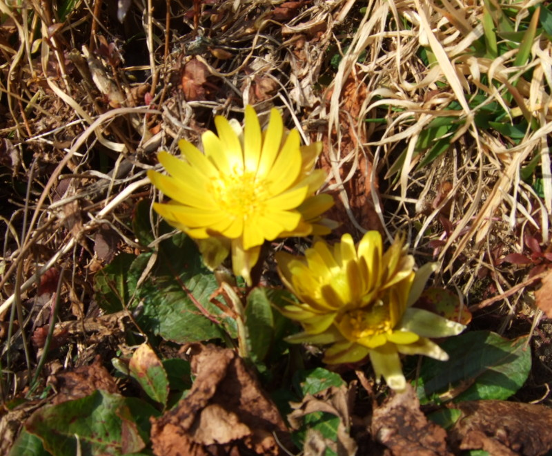 にっぽんの春的風景_d0001843_2258742.jpg