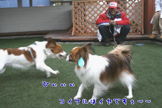 d0013149_1372012.jpg
