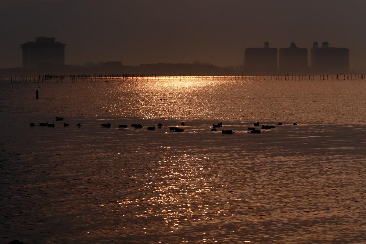 滋賀 琵琶湖 1_f0021869_1845403.jpg