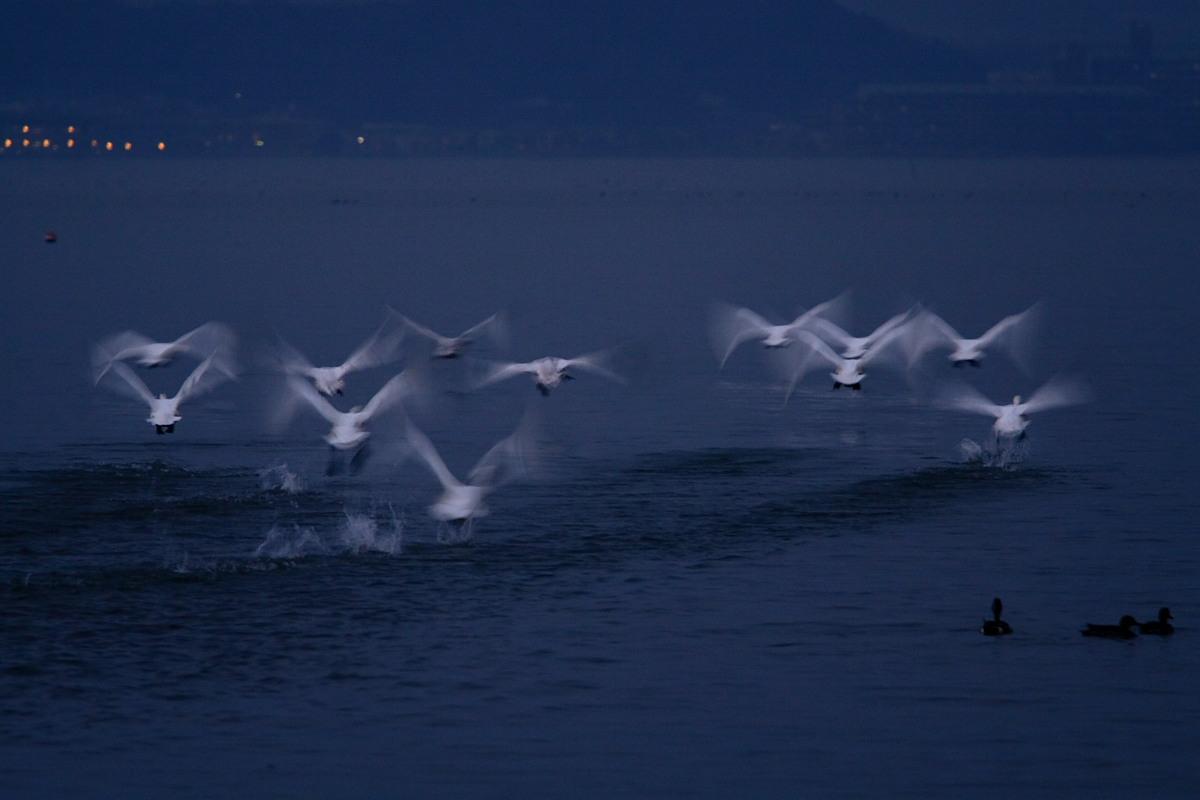 滋賀 琵琶湖 1_f0021869_1931672.jpg