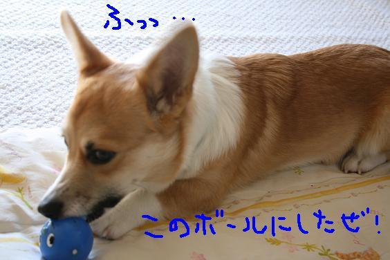 f0116384_1464298.jpg