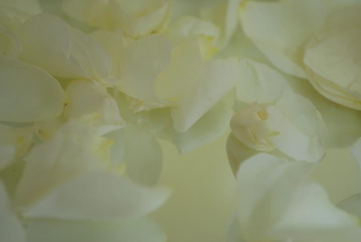 f0128185_1455443.jpg
