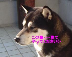 f0089305_133988.jpg