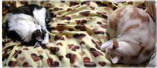 2猫の仲_b0105719_2252325.jpg