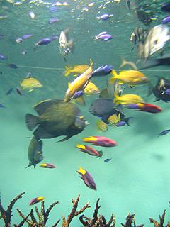 葛西臨海水族館へ行ってきた_c0053520_11144636.jpg