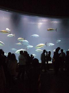 葛西臨海水族館へ行ってきた_c0053520_11204980.jpg