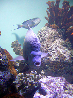 葛西臨海水族館へ行ってきた_c0053520_11345456.jpg