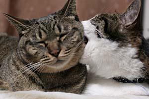 猫の日。_d0034352_22462629.jpg
