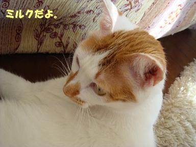 f0046854_1948366.jpg