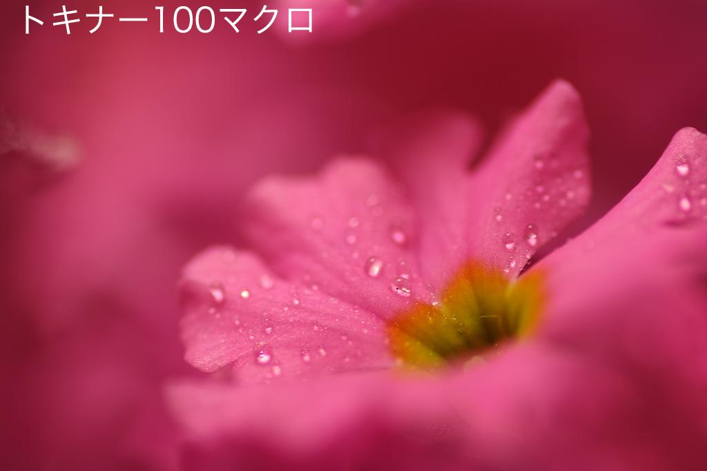 e0070307_16582677.jpg