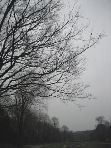 雨後の野川公園_c0107829_21553795.jpg