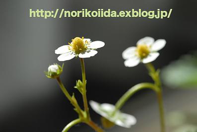 d0086230_12331525.jpg