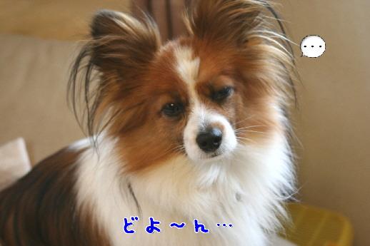 d0013149_033726.jpg