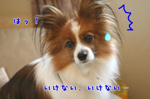d0013149_0355100.jpg