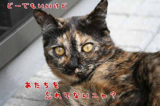 d0013149_125537.jpg