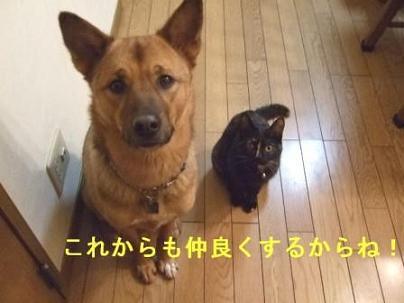 f0046854_2012745.jpg