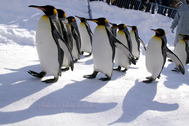 ペンギンさんのお散歩♪_c0052787_22325753.jpg