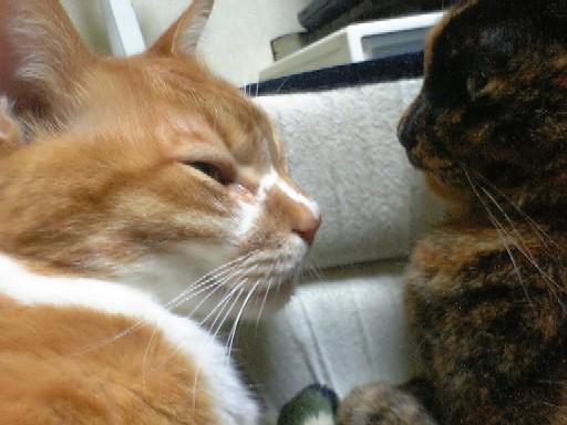 今日の治療と食事~猫の日大サービス_d0053201_17342.jpg