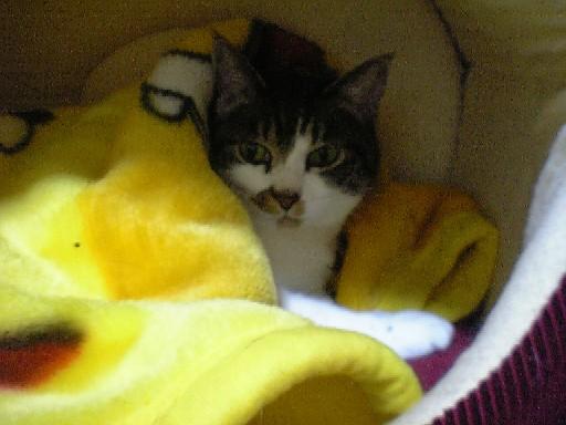今日の治療と食事~猫の日大サービス_d0053201_18451735.jpg
