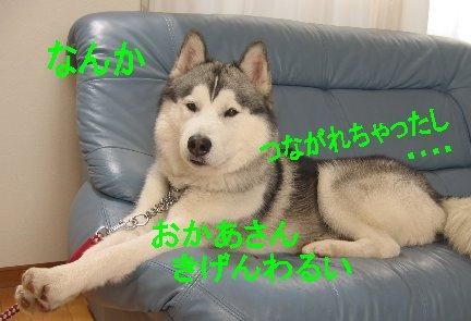 f0112407_1344496.jpg