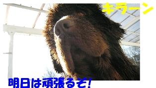 f0077931_1791651.jpg
