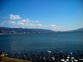 白鳥の湖_f0069775_1715679.jpg
