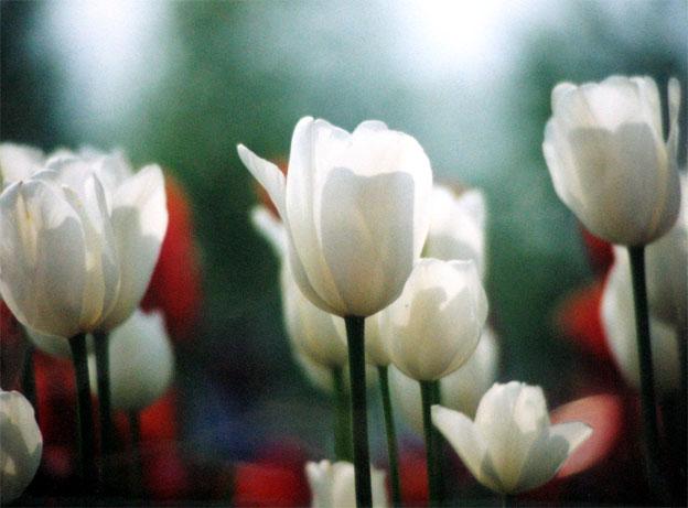 花の写真_b0057679_933122.jpg