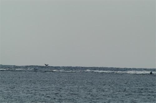2/24 クジラ生情報_a0010095_2146131.jpg