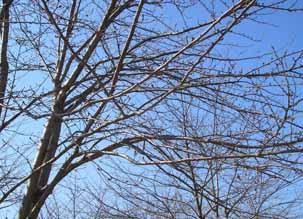 今年の桜_e0055098_1315972.jpg