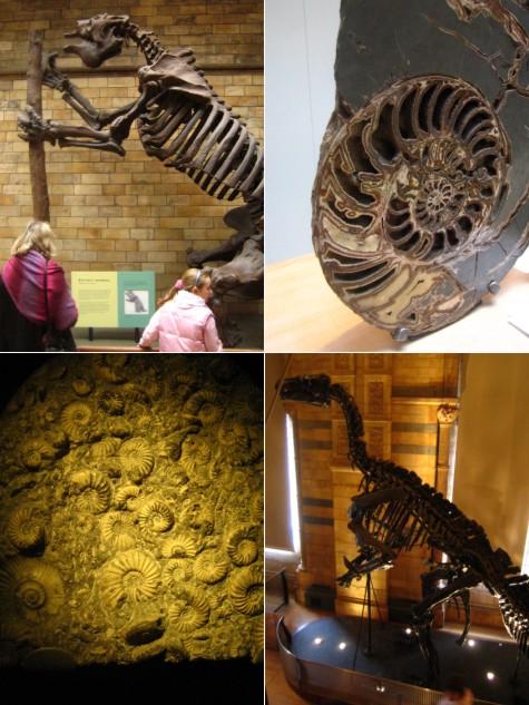 ロンドン旅行記-1: 自然史博物館(化石編)_c0071305_22594388.jpg