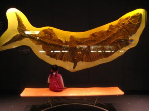 ロンドン旅行記-1: 自然史博物館(化石編)_c0071305_230752.jpg
