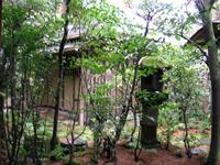 京都旅行1_a0056406_16161428.jpg