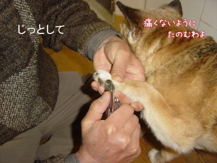 爪切りの方法を変更_f0064906_1819025.jpg