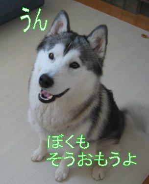 f0112407_0244710.jpg