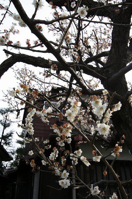 下北沢  シモキタも春めいて参りました_b0061717_2332363.jpg