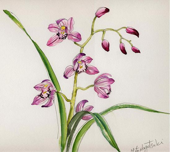 ピンクの蘭 水彩画_b0089338_17511127.jpg