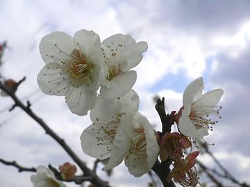 季節の花_c0069048_22404841.jpg