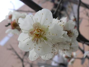 季節の花_c0069048_22484450.jpg