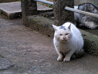 谷中墓地の猫ら_a0028451_1321529.jpg