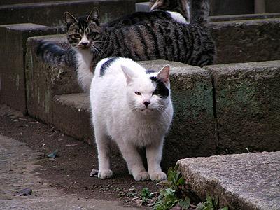 谷中墓地の猫ら_a0028451_1324819.jpg