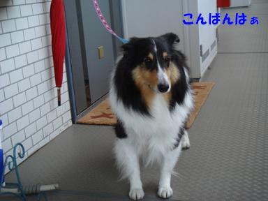 f0046854_20112781.jpg